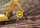 Shovel Logging & Debranching | Sumitomo SH300 & Harvesttech S3000 Delimber